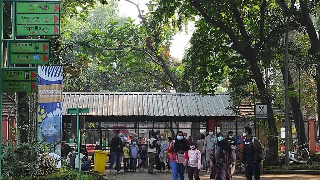 2.460 Orang Kunjungi Ragunan Usai Dibuka Pagi Ini