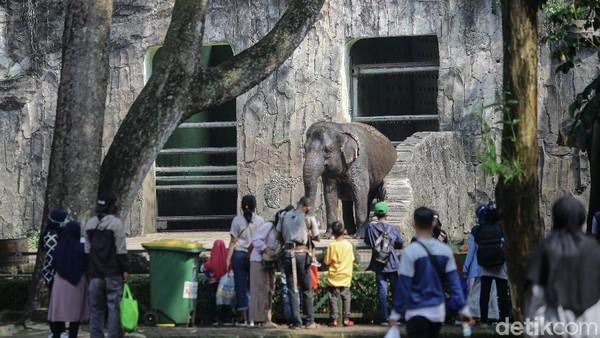 Sejumlah wisatawan memadati Taman Margasatwa Ragunan pada H+2 hari raya Idul FItri 1442 H, Jakarta, Jumat (14/5/2021).