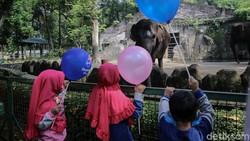 Dibuka Lagi, Wisata Ragunan Diserbu Warga Jakarta