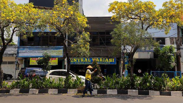 Lebaran Makin Berseri Ditambah Bunga Tabebuya Bermekaran di Surabaya