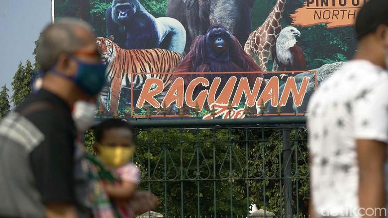 Untuk mencegah penyebaran virus Corona, Taman Margasatwa Ragunan, Jakarta, ditutup sementara. Para pengunjung pun terpaksa balik kanan.