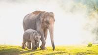 18 Gajah Mati Bersamaan, Disambar Petir atau Keracunan?