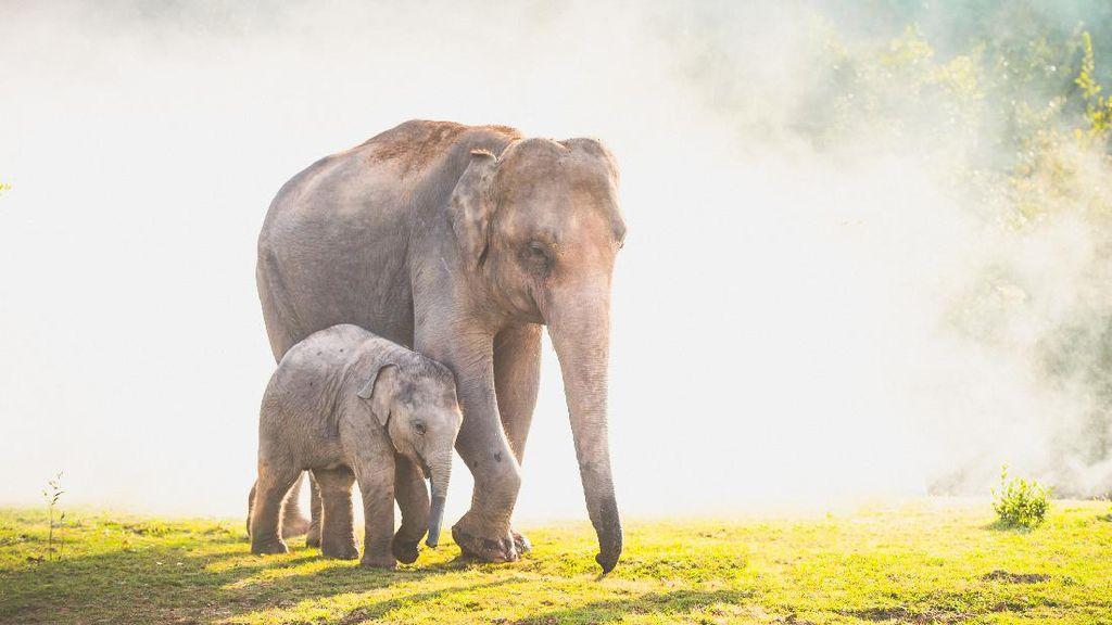 Gajah di India Jalani Tes Covid-19