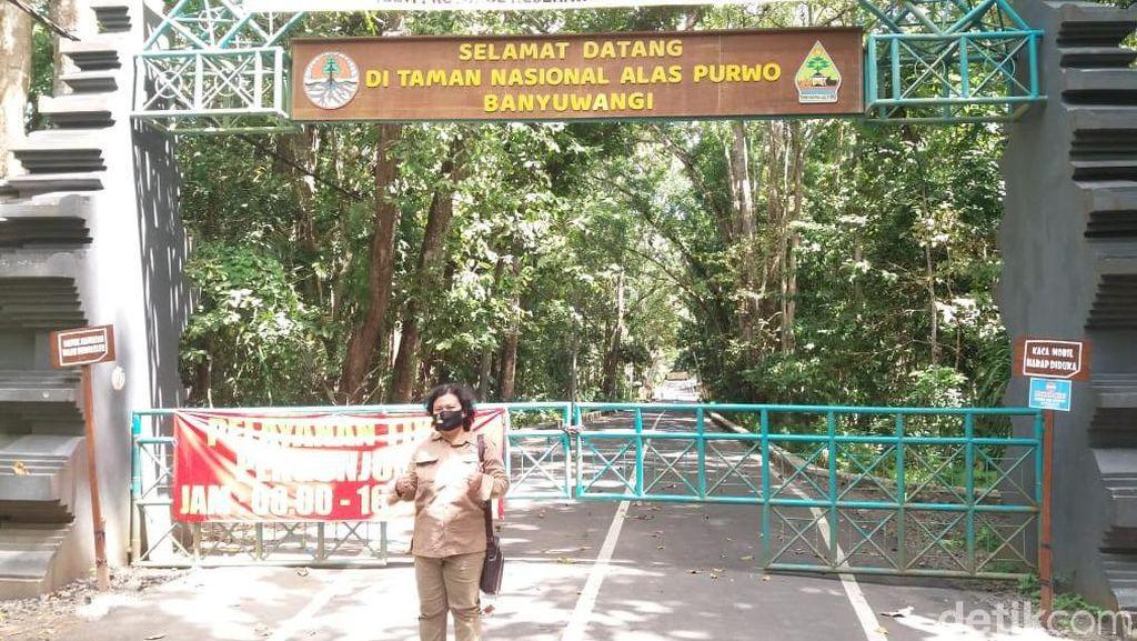 Alas Purwo Tutup Tiga Hari Demi Beri Kesempatan Alam Bernapas