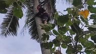 Pria Banyuwangi yang Tidur di Atas Pohon Kelapa Mendadak Linglung Setelah Turun