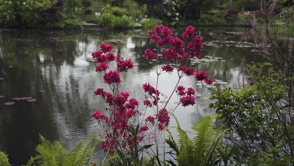 Monet menemukan desa ini dalam perjalanan berkereta pada tahun 1883. Keindahan desa kecil berjarak sekitar 75 km dari Paris ini mampu membuat Monet jatuh cinta hingga ia menyewa rumah agar bisa tinggal di sana untuk melukis.