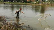 Potret Warga Bekasi Menjala Ikan di Lapangan yang Kebanjiran
