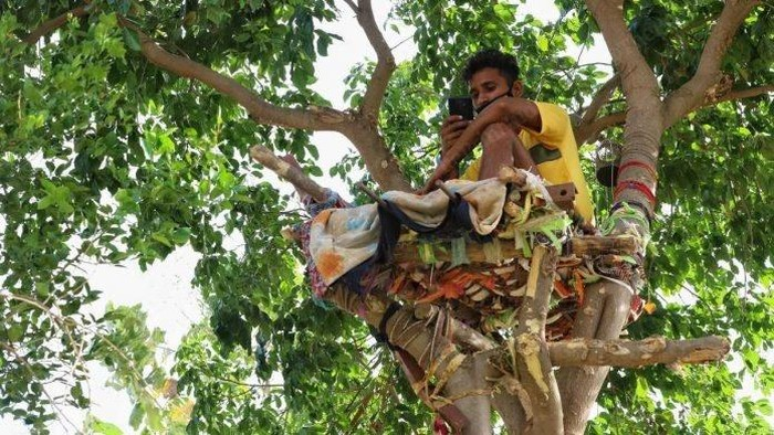 Pria India isolasi diri di atas pohon.