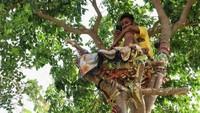 Positif COVID-19, Pria Ini Terpaksa Isolasi Diri di Atas Pohon Selama 11 Hari