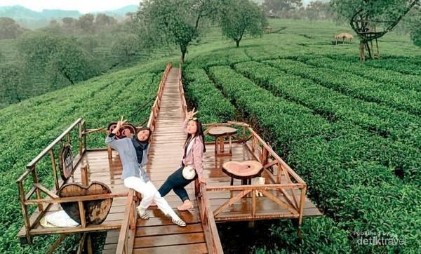 Agrowisata Kebun Teh Wonosari