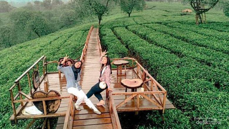 tidak perlu jauh datang keluar kota untuk bisa menuju puncak pegunungan. cukup ke Agrowisata Kebun Teh Wonosari
