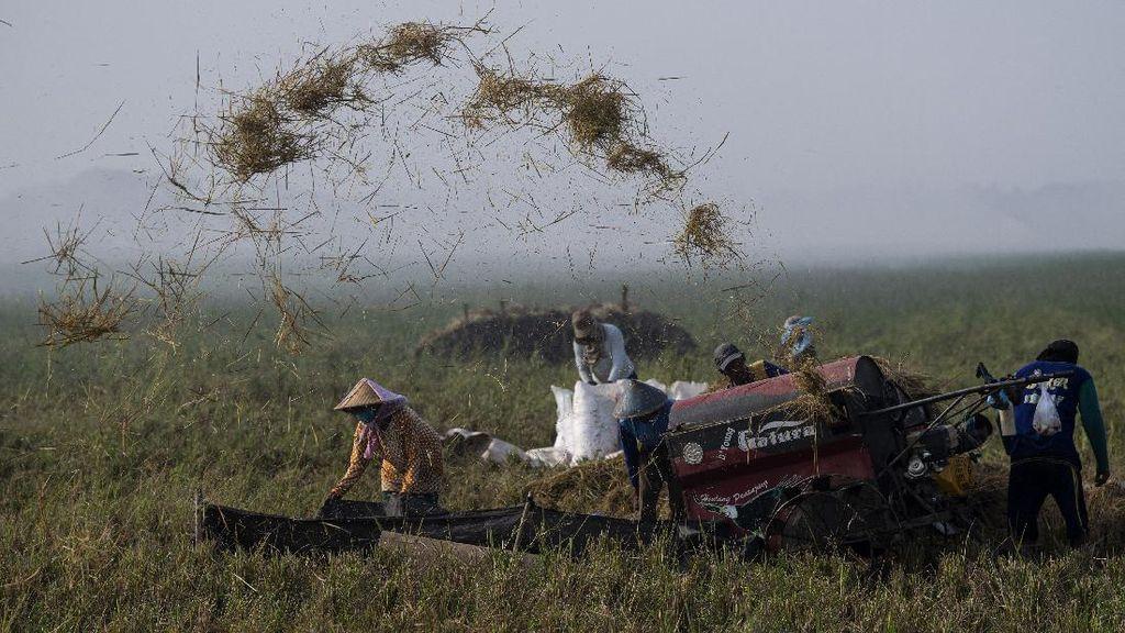 Indonesia Dijamin Tak Perlu Impor Beras