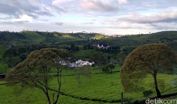 Sunrise Point Cukul memiliki kawasan perkebunan teh yang sejuk udaranya. Pemandangan bukit perkebunan teh yang unik dan indah reliefnya.