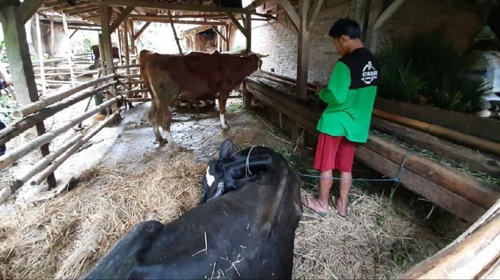 Delapan hewan ternak warga Tulungagung mati Mendadak. Delapan hewan itu terdiri dari tujuh sapi dan satu kambing.