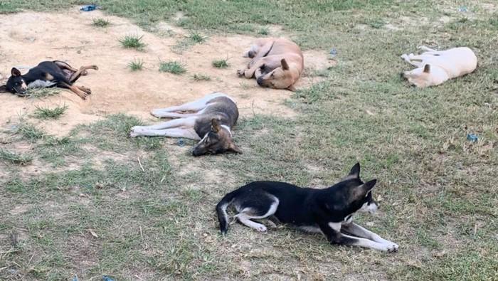 Kondisi terkini anjing hasil sitaan kasus penyelendupan yang dievakuasi RRDC Yogyakarta, Rabu (19/5/2021).