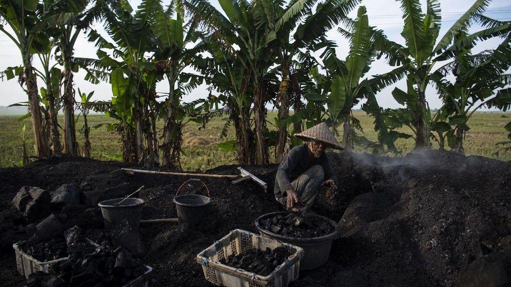Intip Produksi Arang Kayu di Karawang