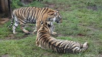Bandung Zoo yang Sudah Ngap-ngapan