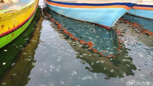 ubur-ubur di probolinggo