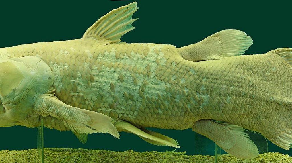 Ikan Purba dari 420 Juta Tahun Silam Ditemukan Hidup