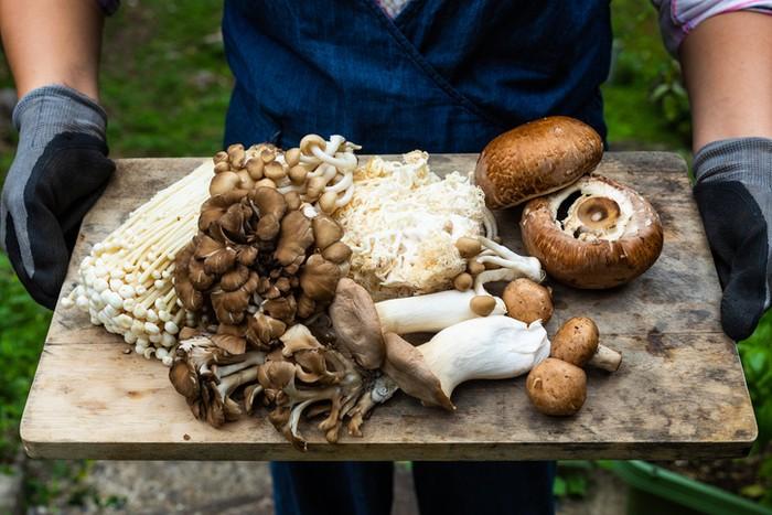 Ini 6 Manfaat Makan Jamur Secara Teratur