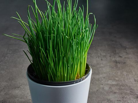 white flower pot with fresh chives on the kitchen desk