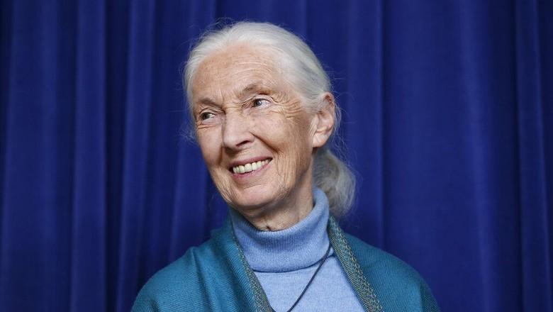 Primatologis Jane Goodall saat merayakan ulang tahun ke-85 (AP Photo/Damian Dovarganes, File)