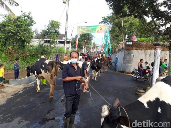 Digelar diakhir perayaan Lebaran atau H+7, bertepatan dengan kupatan warga menyebutnya bakdo kupat atau bakdo sapi. Ragil Ajiyanto/detikcom)