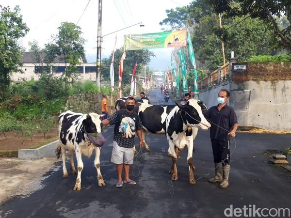Kepercayaan warga pada tradisi syawalan atau bakdo kupat, warga membawa hewan ternaknya keliling kampung, karena pada hari itu Kanjeng Nabi Sulaiman memeriksa hewan-hewan ternak milik warga.(Ragil Ajiyanto/detikcom)