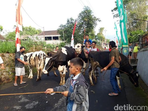 Tradisi lebaran sapi merupakan puncak perayaan Hari Raya idul Fitri. (Ragil Ajiyanto/detikcom)