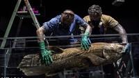 Ikan Purba yang Ditemukan di Sulawesi dan Afrika Umurnya Bisa Seabad!