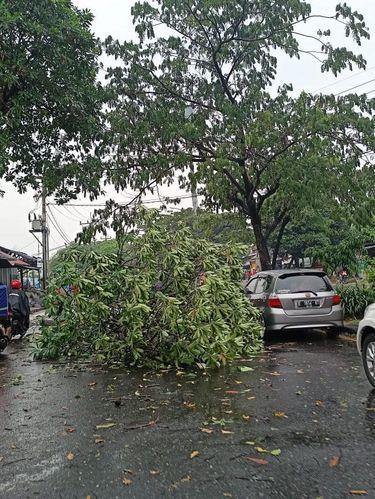 Pohon tumbang di Jalan Juanda Depok