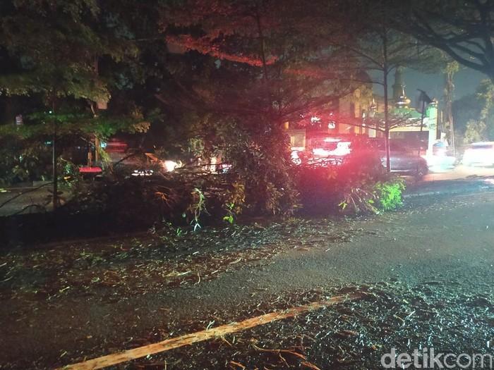 Sisa-sisa pohon tumbang di Jl Margonda Raya, Depok, Jawa Barat, 22 Mei 2021. (Adhyasta D/detikcom)