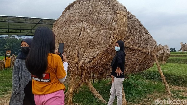 Jerami yang biasanya dibakar pasca panen, namun di tangan para petani di Banjarnegara ini disulap menjadi karya seni. Ada patung berbagai bentuk yang diciptakan oleh para petani ini. (Uje Hartono/detikTravel)