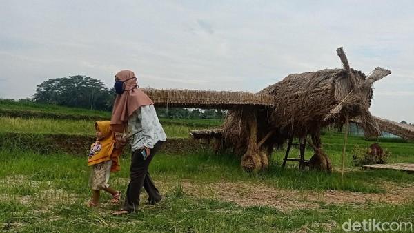 Untuk membuat patung-patung jerami ini dibutuhkan waktu sekitar 2 minggu dengan bahan 3 truk jerami. Semua bahan hanya memanfaatkan jerami dari area sawah di daerah sekitar desa saja. (Uje Hartono/detikTravel)