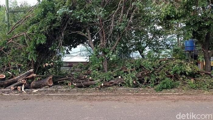 Sisa pohon tumbang di Depok, Jawa Barat (Sachril Agustin/detikcom)