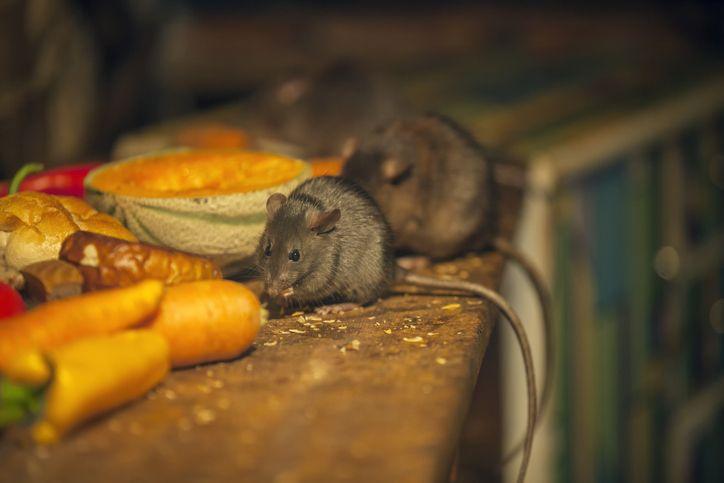 Jorok! Tikus Hingga Saus Bekas yang Dipakai Lagi Ditemukan di Restoran