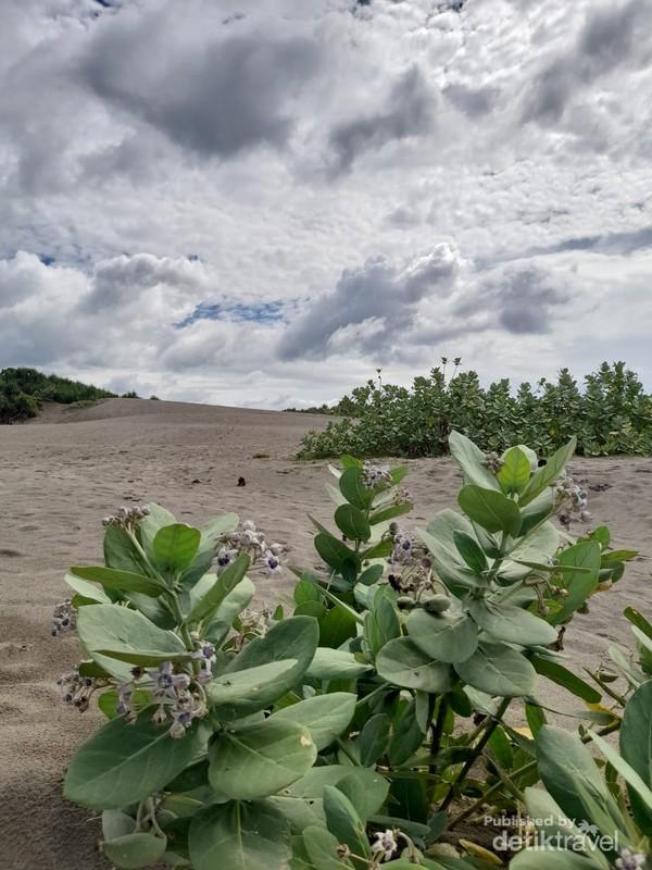Gumuk pasir di ujung Pantai Sayang Heulang