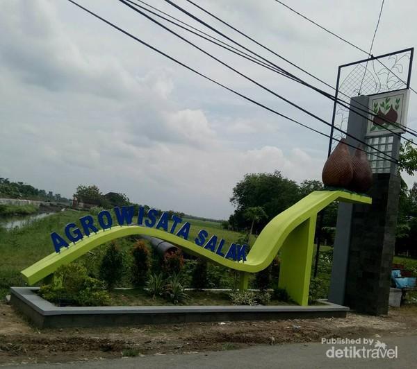 Kebun salak di Taman Maha Dewi Bojonegoro.