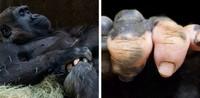 fotoiinet kumpulan hewan vitiligo