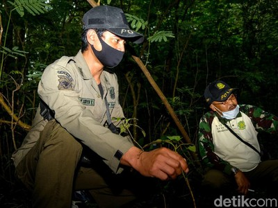 Mengenal Polisi Hutan, Sosok Penjaga Paru-paru Dunia