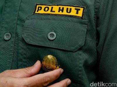 Kisah Polhut Menjaga Hutan Sampai Bertaruh Nyawa