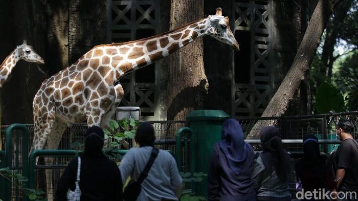 Taman Margasatwa Ragunan ramai didatangi pengunjung saat libur Waisak, Rabu (26/5/2021). Pengunjung datang bersama rombongan keluarga.