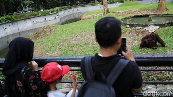 Seorang pengunjung mengabadikan salah satu hewan koleksi Ragunan.