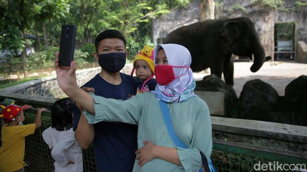 Beberapa warga melakukan swafoto dengan latar belakang gajah.