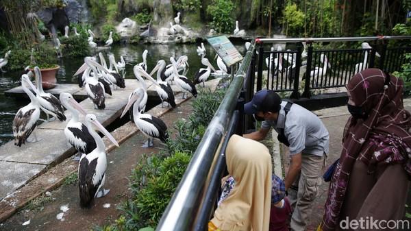 Pengunjung yang datang ke Ragunan hanya warga yang ber-KTP Jakarta.
