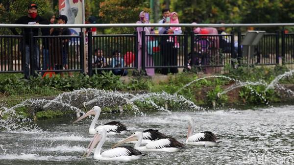 Sejumlah burung asyik bermain air saat pengunjung mengabadikan menggunakan handphone.