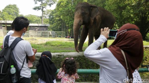 Kandang gajah paling banyak dikunjungi warga.