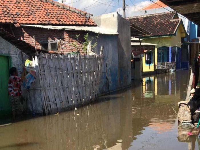 banjir rob pesisir pantai utara Probolinggo