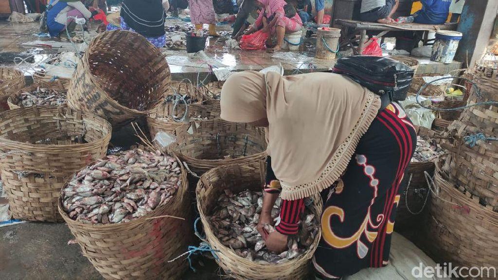 Miris, Harga Ikan di Lamongan Justru Terjun Bebas Saat Masa Panen