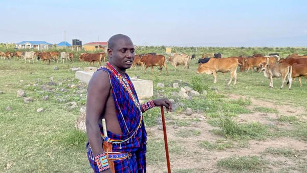 Selama beberapa dekade, orang Maasai telah menyerahkan tanah untuk beberapa taman paling terkenal di Kenya. Kata Noah Lemaiyan, seorang penggembala, tinggal di pinggiran Amboseli, sejak turis berhenti datang pendapatan desanya pun kering.